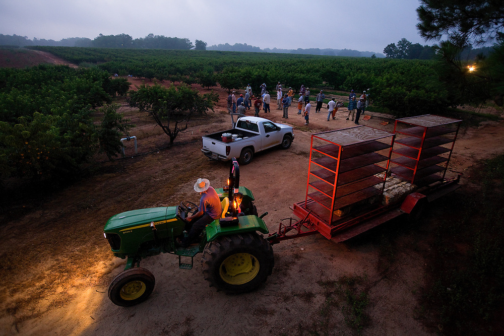 Shortly after 6 A.M. migrant workers from Mexico begin their day of picking peaches