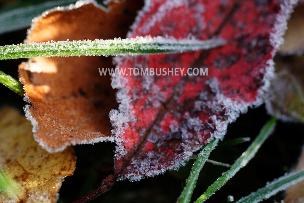 Middletown, N.Y. - Leaves and gress are covered in the first frost of the fall season on the morning of Oct. 28, 2007.