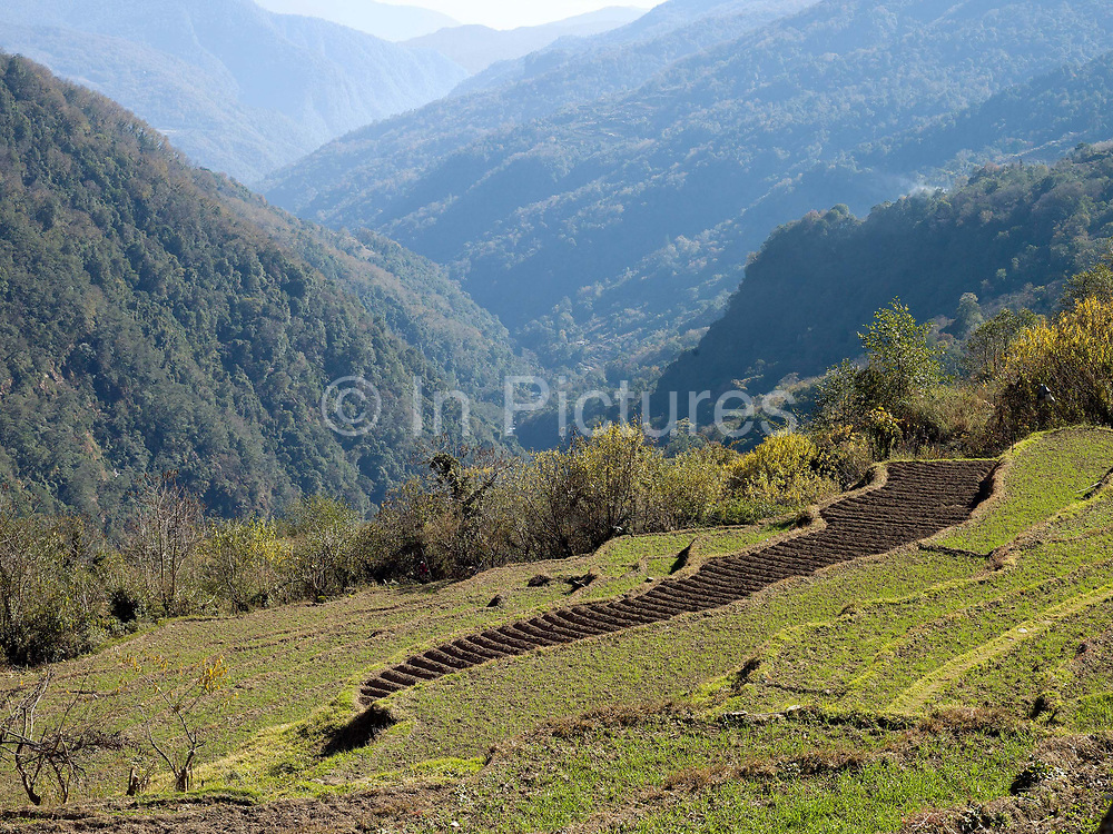 Potato field and rice terraces during the Winter in the remote mountain village of Gyenshari in Western Bhutan. Despite rapid urbanisation, the majority of people, 66% of all households, still live in rural Bhutan, most dependent on the cultivation of crops and livestock breeding.