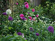 Blenheim Road Garden