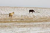 3 Prairies and badlands