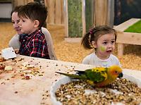 Bialystok, 04.11.2017. Papugarnia nowe miejsce zabaw i edukacji dla dzieci i doroslych . Na 370 m2 powierzchni lata kilkadziesiat papug roznych gatunkow . Ptaki od malego karmione sa jedynie z reki , wiec bez obaw przylataja do ludzi majacych dla nich pokarm lub beztrosko siadaja na ludzkich ramionach czy glowach fot Michal Kosc / AGENCJA WSCHOD