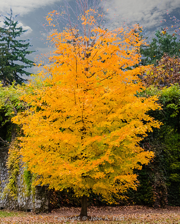 This tree was just radiant in the late day sun.  It brightened everything around it.
