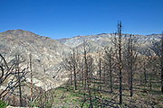 In April, 2010, about six months after the Station Fire, re-growth has yet to appear in some of the burn areas of the in Angeles National Forest. This may be due to higher burn temperatures that killed root structure or rains that removed topsoil. Colder temperatures may also be responsible. Areas with less re-growth often have whiter soil than areas with re-growth indicating topsoil may be gone with only bedrock remaining. The Station fire, the tenth largest wildfire in California History burned over 160,000 acres from late August to mid October 2009. Angeles Forest Highway, Angeles National Forest, Los Angeles County, California, USA