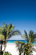 Palm trees and Pink Sands Beach, Harbour Island, Eleuthera, The Bahamas