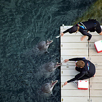 "USA, Hawaii, Honolulu. A balcony view of ""Dolphin Quest"" trainers feeding three dolphins at the Kahala Hotel & Resort."