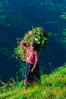 A local woman walking along a ridge above the Pokhara Valley, Nepal at Bimirapani.