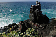 Marine Iguana, (Amblyrhynchus cristatus), Punta Suarez, Española, Galapagos, Ecuador