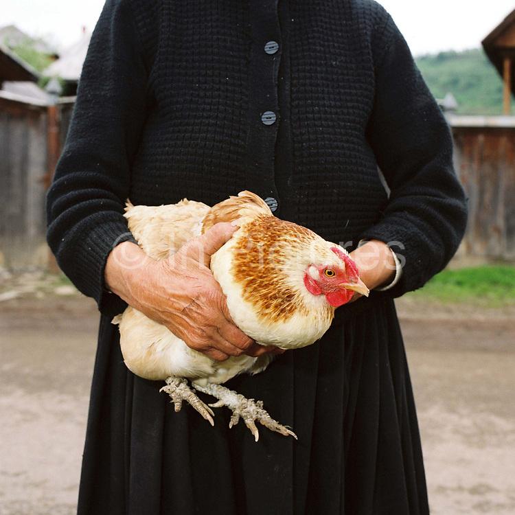 A peasant farmer holds a chicken, Botiza, Maramures, Romania.