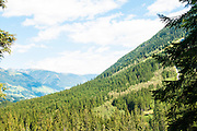 Austria, Tyrol, Hohe Tauern National Park the Krimmel forest
