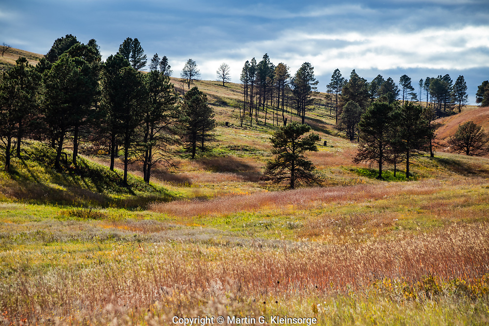 The greens, reds and brown colors  of the autumn season on the prairie grasslands of Custer State Park.  South Dakota.