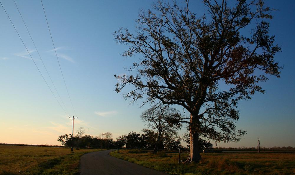 Dusk, Front Ridge Road, Pecan Island, LA