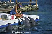 trainer feeds bottlenose dolphins, Tursiops truncatus, <br /> at Theater of the Sea, Islamorada, Florida Keys, USA