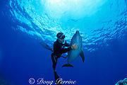 Spot, a wild, lone, sociable bottlenose dolphin, Tursiops truncatus, with pal Jason Belport, Cayman Brac, Cayman Islands, British West Indies ( Caribbean Sea ) MR 281