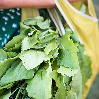 Detail of a reusable shopping bag filled with fresh produce on the arm of a local (model released). The weekly River Arts District Farmers Market is held Wednesdays at 175 Clingman Avenue (next to All Souls Pizza) in the River Arts District of Asheville, North Carolina.