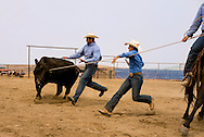 Wilsall Ranch Rodeo, Wild Cow Milking  Competition, Dusty Holland, Cassie Woosley, Kurt Mraz, Lazy SR Ranch team, Montana