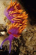 Nudibranchs and Shells