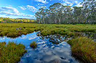 Australia; Australian,  Tasmania; Franklin-Gordon Wild Rivers National Park; UNESCO; World Heritage; Blue Gum Forest