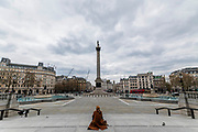 A solitary man enjoys a quiet Trafalgar Square in the company of a bottle of wine - The 'lockdown' continues for the Coronavirus (Covid 19) outbreak in London.