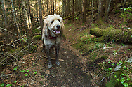 A very dirty, happy doodle in the woods