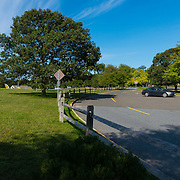 Green tree on Cape Cod near the Salt Pond visitors center