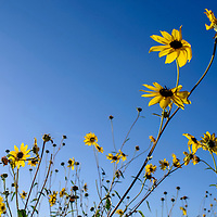 Wildflowers catch the evening sun as they bloom along a roadside in Gallup Thursday.