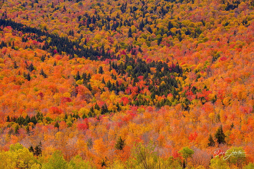 Forested slopes in autumn, Gorham, New Hampshire, USA