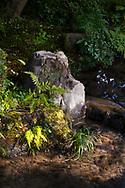Sunlight on rocks and ferns beside a stream in the Kenrokuen Garden, Kanazawa, Ishigawa, Japan