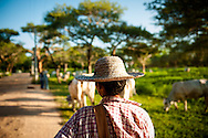 Myanmar, Bagan. Shepherd comes back with its herd after a day spent in the meadow.