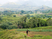 Farmer standing in his field in the agricultural landscape of Cotabato province, Mindanao Island, The Philippines. In the Philippines climate change is contributing to an increase in the frequency and intensity of typhoons as well as a general rise in temperatures and rain leading to an increase in droughts, flash floods and landslides. This is having a huge impact on smallholder farmers who depend on one cash crop leaving them vulnerable to any changes in weather patterns. If their crops fail they are left with no other source of income for that year. In central Mindanao Oxfam is working with local partners and governments to increase awareness of climate change in poor communities and reduce the risks it creates to vulnerable farmers by supporting them in crop diversification.