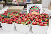 Swanton Berry booth at the Altos farmers market