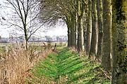 Nederland, Persingen, 21-2-2019 Rivierlandschap, polderlandschap in de Ooijpolder bij Nijmegen .Foto: Flip Franssen