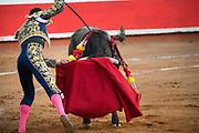 Spanish bullfighter Paco Urena thrusts a sword into a bull at the Plaza de Toros bullring March 3, 2018 in San Miguel de Allende, Mexico.