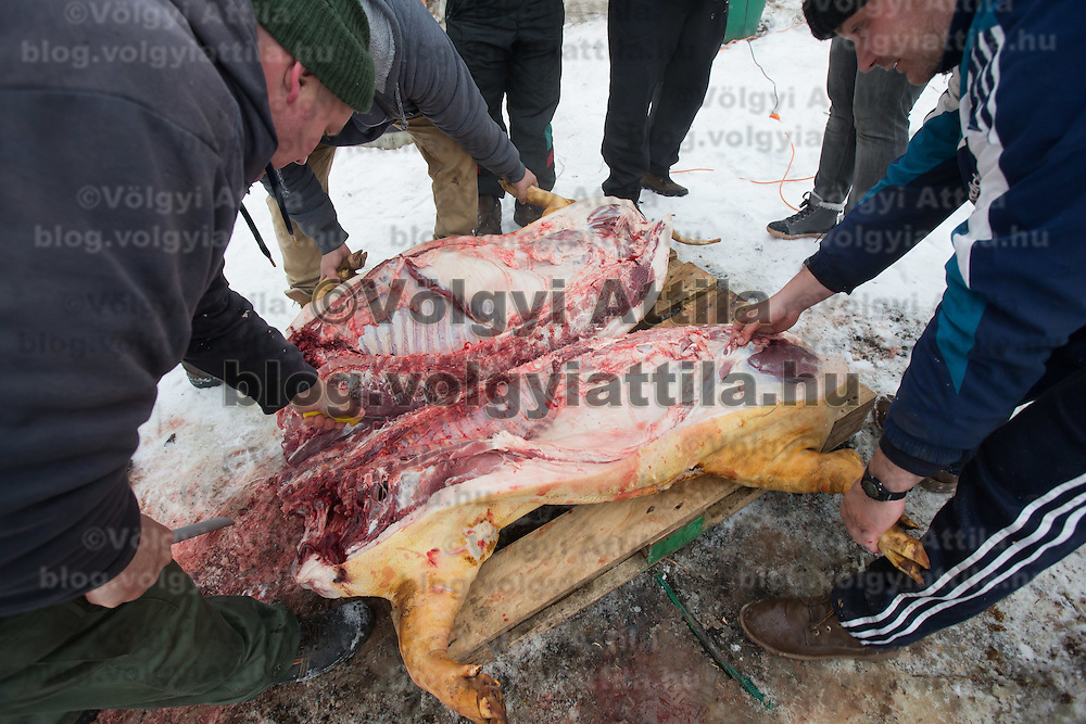 Workers cut a pig in two halves during a Pig killing in Hungary and meat processing event in Pomaz (about 20 kilometres North of capital city Budapest), Hungary on January 28, 2017. ATTILA VOLGYI