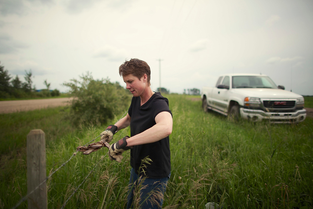 Colleen on her feedlot farm in Grand Prairie, Alberta, Photograph by Todd Korol