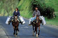 Portugal, Archipel des Açores, Île de Sao Miguel, transport du lait // Milk transportation, Sao Miguel island, Azores, Portugal