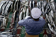 Fish Market<br /> <br /> The Sultanate of Oman is a country in Southwest Asia. It borders the United Arab Emirates in the northwest, Saudi Arabia in the west, and Yemen in the southwest.<br /> The oil discovery, in the 60's, started to transform this asleep country. Today, Oman is  torn by modern roads, industrialized and rich ( Omanization ). The tradition still dominates life of the 2,5 million inhabitants: strong religion ( muslim ), traces of tribal loyalties and a very characteristic culture.