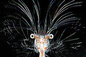 Invertebrates - marine - Most popular images
