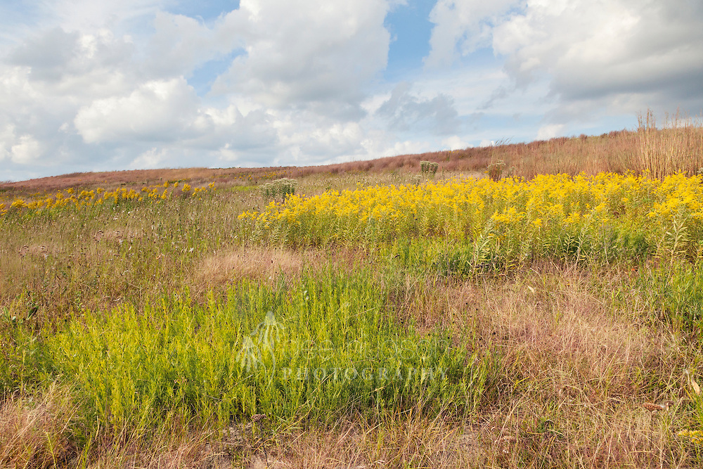 Nature's fall prairie quilt blankets Fameflower Knob, beginning with the patch of green coreopsis stems in the foreground, followed by a stand of yellow Canada goldenrod, and then all surrounded by orange–red little bluestem grass.