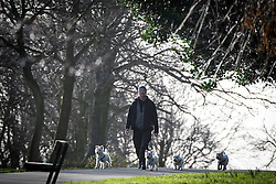 © Licensed to London News Pictures . 27/02/2014 . Buile Hill Park , Salford , UK .  Jason Woodward (43 from Salford) walking his family of West Highland Terriers in the park . Glorious spring sunshine in Buile Hill Park this afternoon (Thursday 27th February 2014) as weather is predicted to take a colder turn . Photo credit : Joel Goodman/LNP