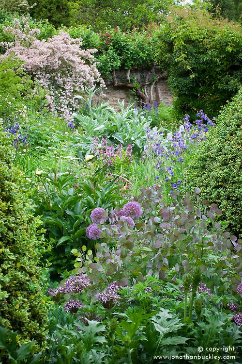 Borders at Docwras Manor with Allium cristophii, honesty seedpods, Iris sibirica abd Cynara cardunculus
