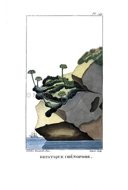 Flore pittoresque et médicale des Antilles, ou, Histoire naturelle des plantes usuelles des colonies françaises, anglaises, espagnoles, et portugaises /<br />Paris :Ches l'Editeur,1833.<br />https://biodiversitylibrary.org/page/53287856