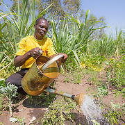 CAPTION: Fidelis irrigating the family's onion patch using a watering can. Very few people in this area use treadle pumps. However, World Renew recently loaned five such pumps to the area's farmers' group. Fidelis, who joined this group only recently, says he has borrowed a treadle pump from a friend in the past, and because he found it very useful he would be interested in availing of the treadle pump loan scheme in the near future. LOCATION: Nsanja-Seze, Vila Ulongwe area, Angonia District, Tete Province, Mozambique. INDIVIDUAL(S) PHOTOGRAPHED: Fidelis Dickson.