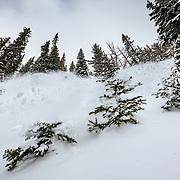 Jess McMillan skis the backcountry powder and sprays the photographer near Jackson Hole Mountain Resort in Teton Village, Wyoming.