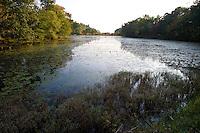 Diverse vegetation along Joshua Creek, near the Connecticut River, Lyme, CT.