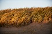 Duinen langs de kust van Den Haag - Dunes along the coast of The Hague, Netherlands,