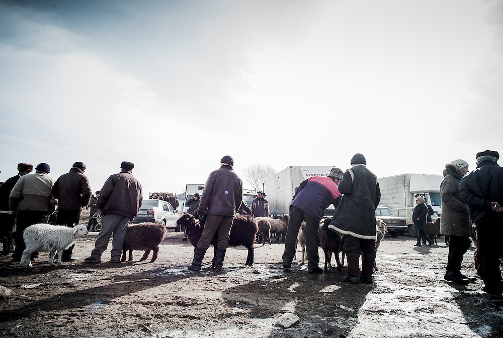 Locals line up to show their sheep.
