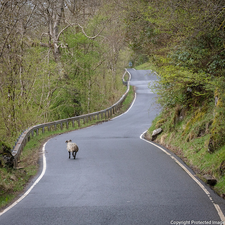 Traffic on the road by Loch Long, Argyll & Bute, Scotland.