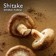 Shitake Mushroom Pictures   Shitake Food Photos Images & Fotos