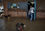 Throughout the Crow Indian Reservation there is no established animal control facilities, therefore many animals are left astray to wander throughout the reservation and beg for food from the Native Americans that live there.